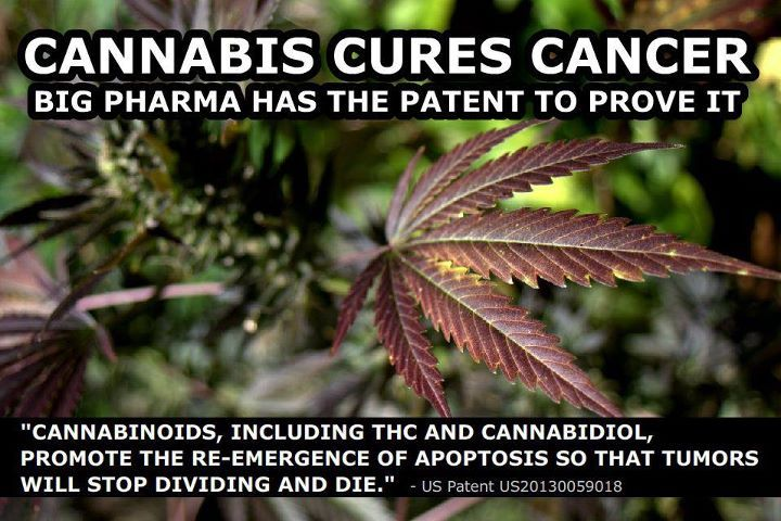 34 Medical Studies Proving Cannabis Cures Cancer