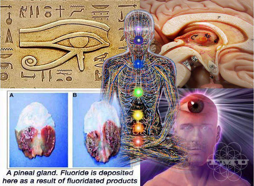 How to Decalcify and Detoxify the Pineal Gland | The Mind Unleashed