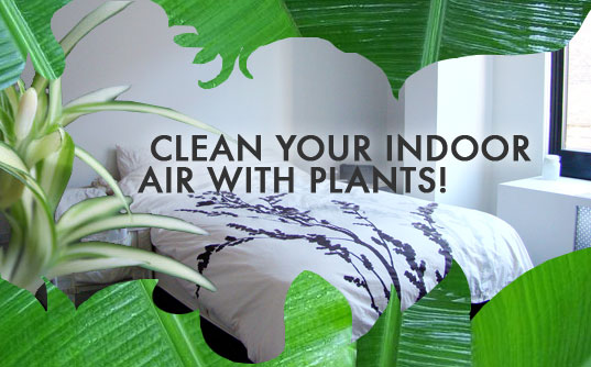 9 Cleansing House Plants To Detoxify The Air In Your Home
