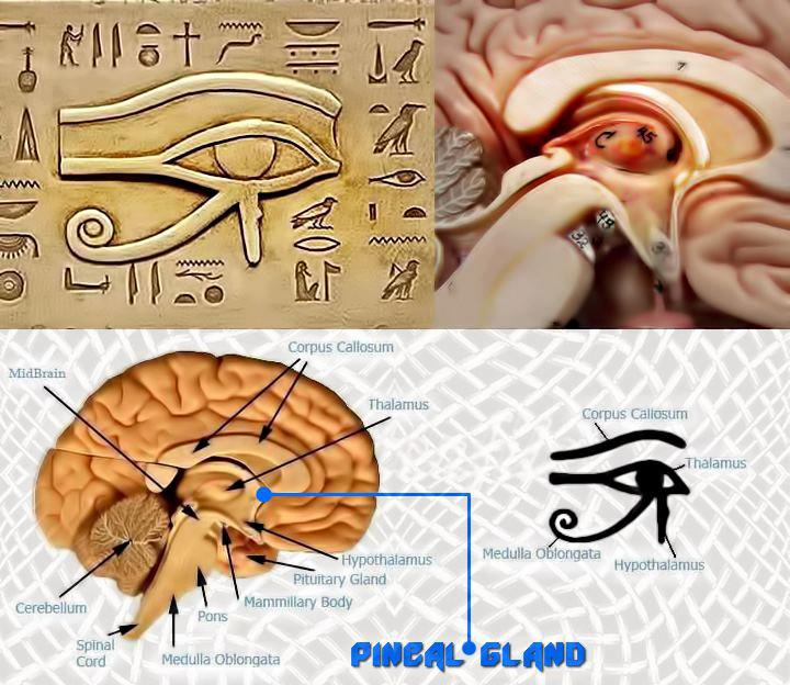 Pineal Gland Natural Treatment