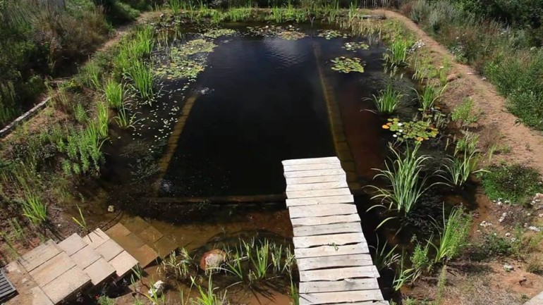 natural pools a beautiful self sustaining swimming pool ForSelf Sustaining Pool