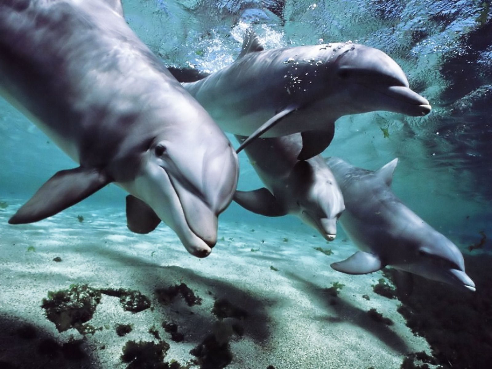 human and dolphins I'm reading a book about dolphins and was amazed to discover that the area in the brain that controls empathy is much larger in dolphins than it is in humans.