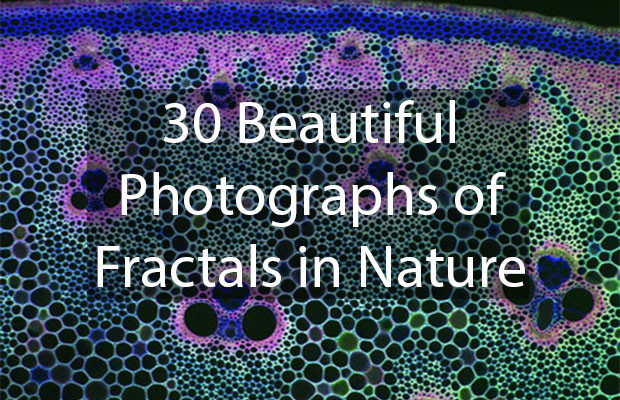 30 Beautiful Photographs of Fractals in Nature