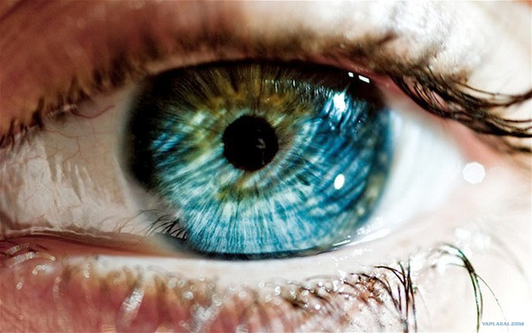Science your eye color reveals a lot about you geenschuldenfo Gallery