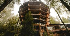 Chilean Tree House