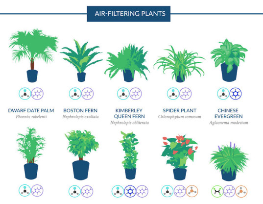 Top 18 Houseplants For Purifying The Air You Breathe