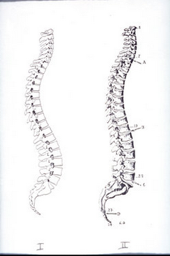back pain spines