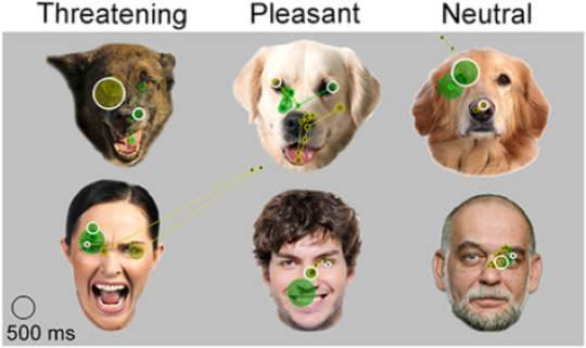 Dogs view facial expressions on a monitor. Credit: Image courtesy of University of Helsinki