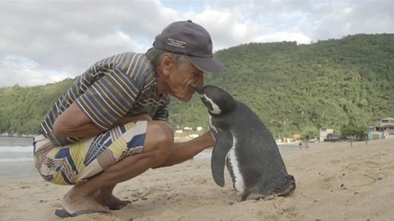 penguin who swims 5000 miles