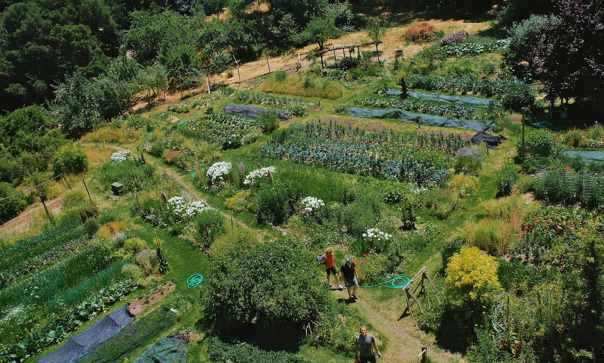intensive and organic farming Organic farming is much healthier because there is no use of synthetic pesticides, fertilizers, antibiotics or growth hormones consumption of organic foods can.