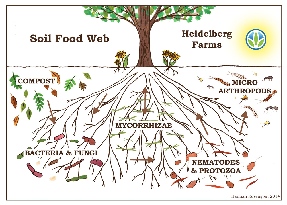 hf-soil-food-web-online-version-with-sun1