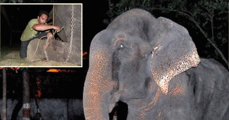 Elephant Weeps While Being Rescued After 50 Years Of Confinement