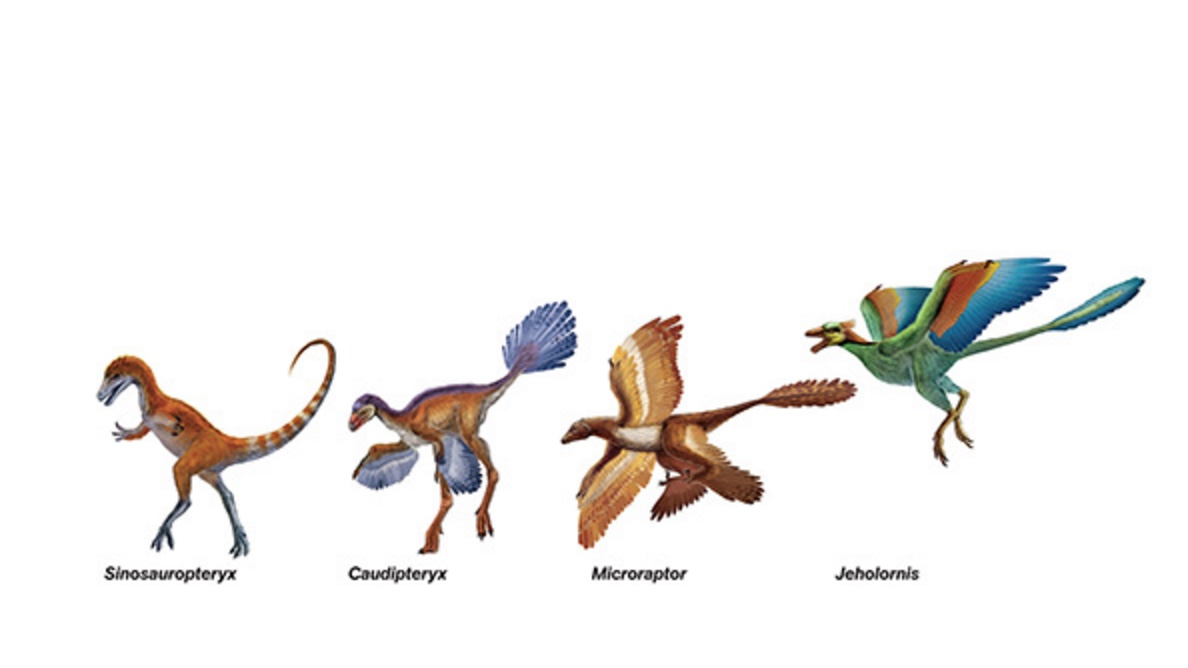 dinosaurs-that-fly-copy