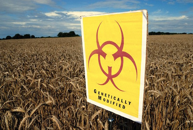 Eliminating GM Food Could Improve Heath and the Environment