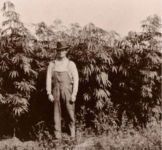 """Farm Bill Allows Hemp Growing in 10 States for """"Research"""" Yet it Stays on Federal Substance I Status"""