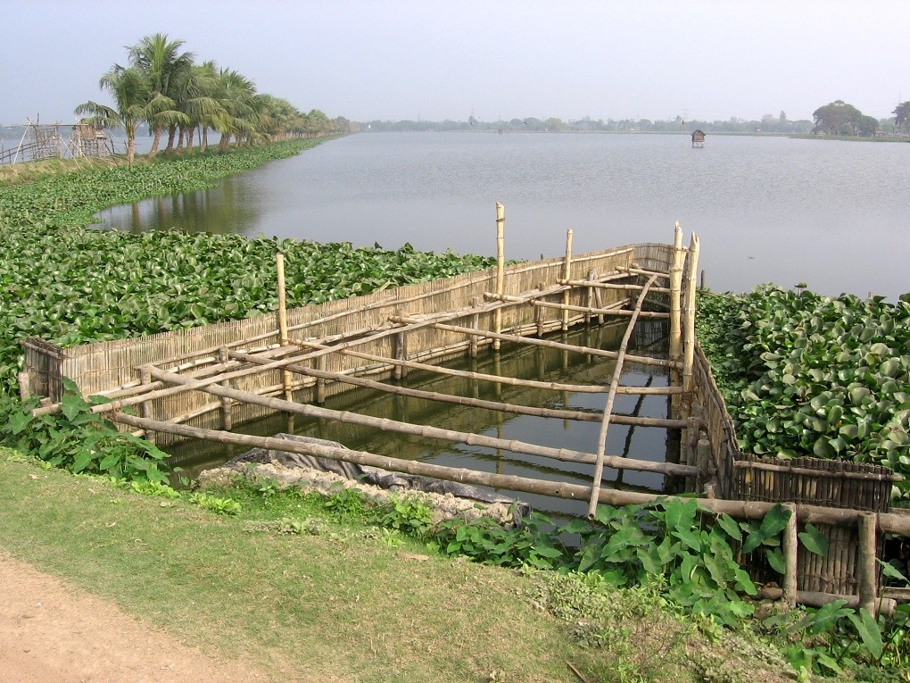 Natural Wetland in India Filters 198 Million Gallons of Waste Every Day Without Chemicals East-Kolkata-Wetlands-3