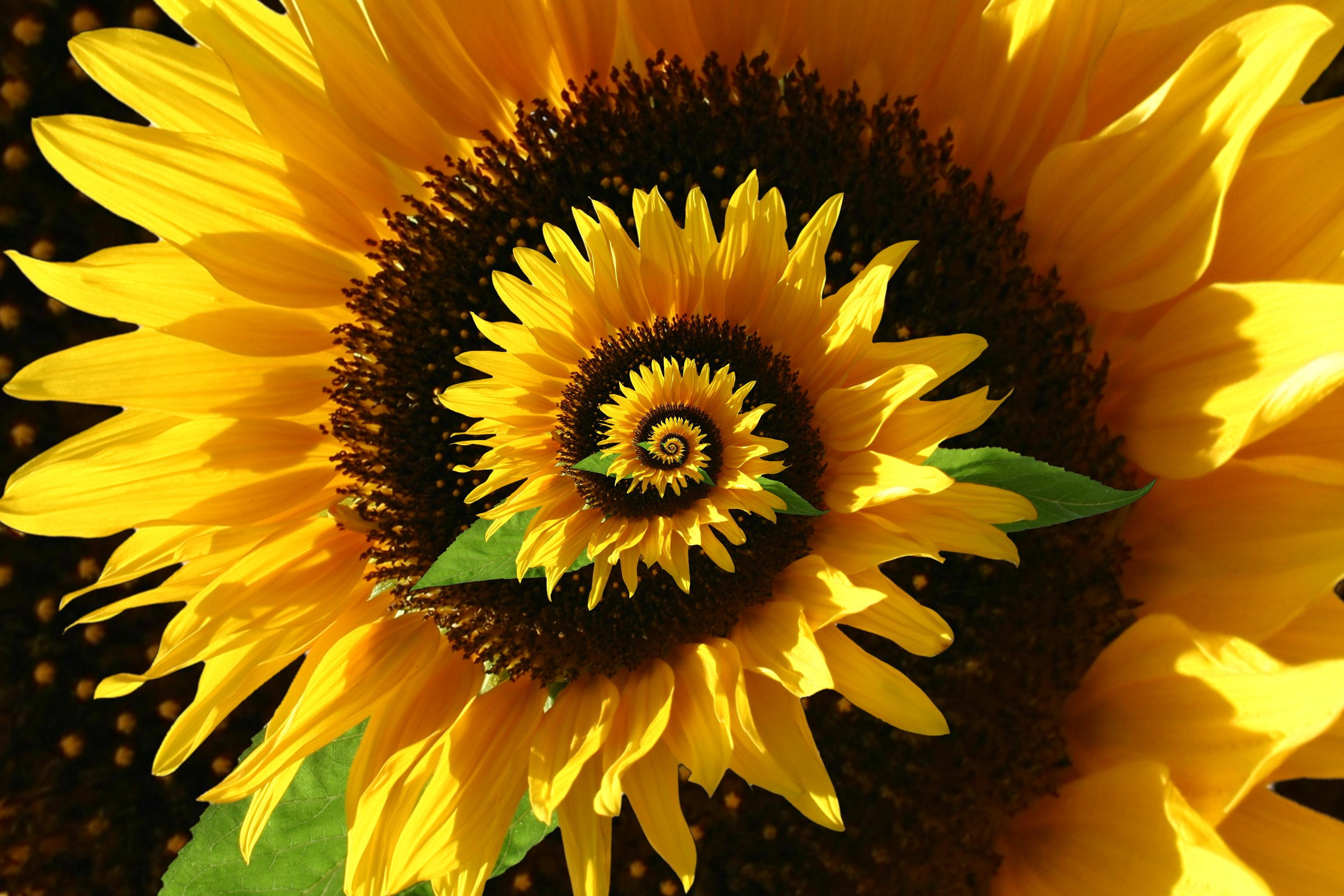 Woman Records the 'Voice of a Sunflower' — and It Sounds Like Music From Another Dimension