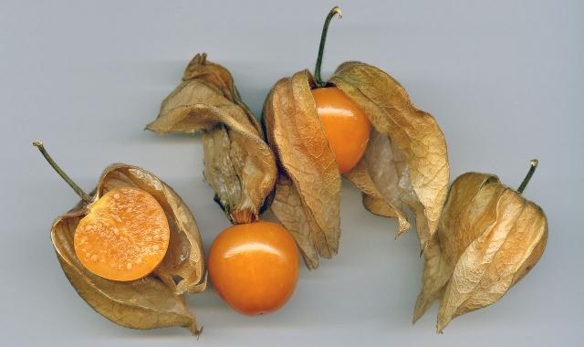 CRISPR and genetic engineering of our food  Physalis_rz