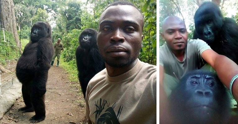 World's Coolest Selfie? Gorillas Pose With Anti-Poaching Rangers Gorillas-pose-anti-poaching-rangers