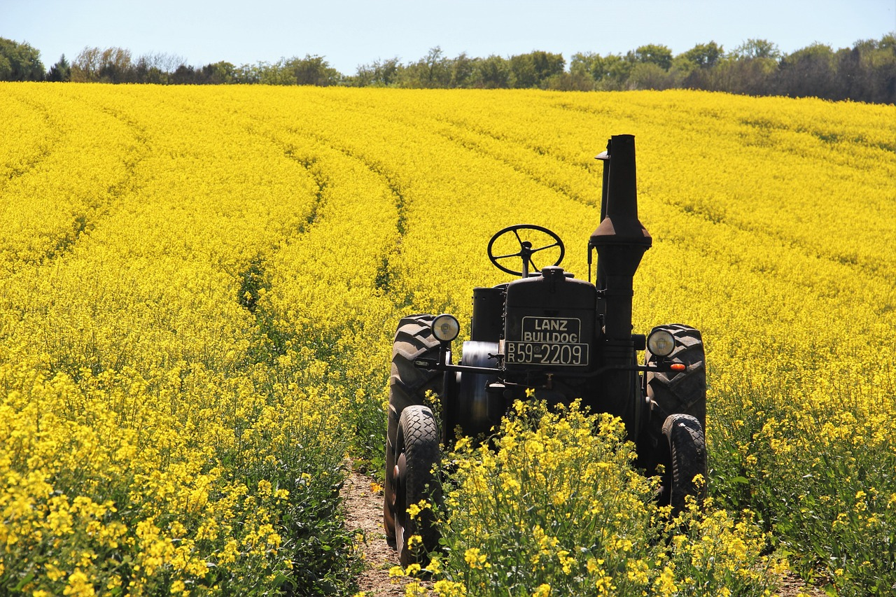 Christopher Walken to Play Canadian Farmer Opposing Monsanto in Upcoming Film    Canola