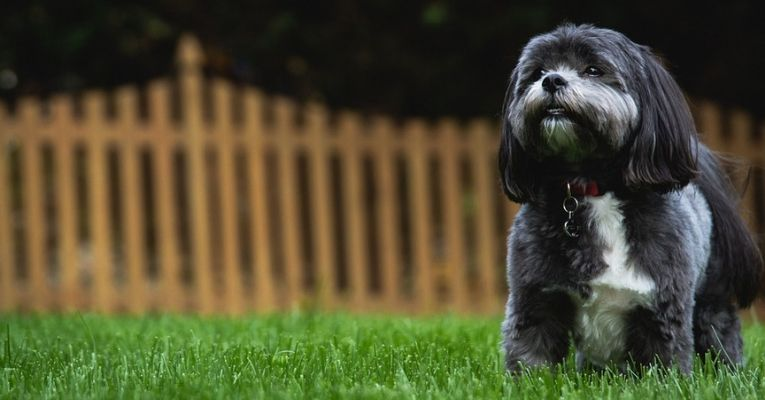 Healthy Dog Killed Because Its Dead Owner Wanted to Be Buried With It