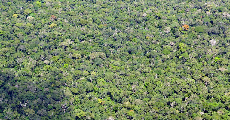 Deforestation of Brazilian Amazon Rainforest Surges to Record High