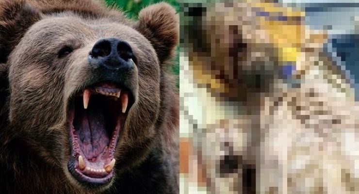 Man Dragged Away by Bear Found Alive
