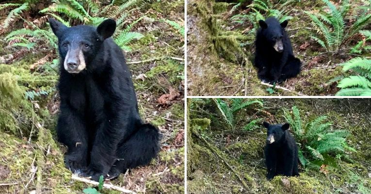 Officials Shot and Killed a Baby Bear Because Tourists Fed It Too Much Food