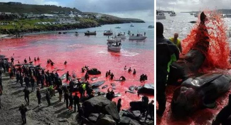 Sea Turned Red Blood Whales Dolphins