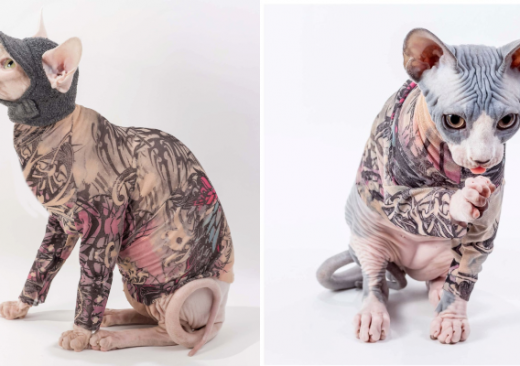 Tattoo Sleeve for Your Cat