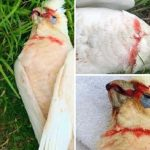 Birds Fall From Sky Shrieking and Bleeding From Eyes