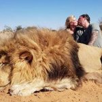 Couple Kissing After Killing Lions