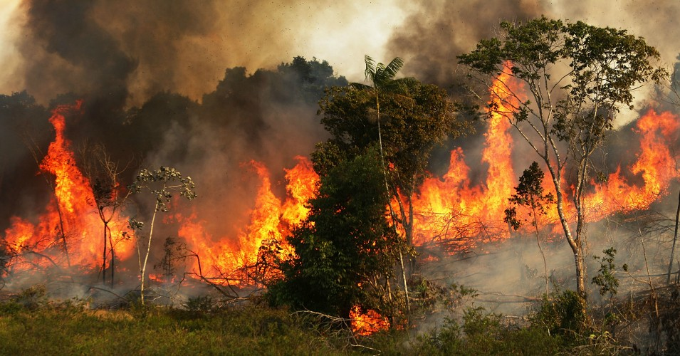 The Amazon Rainforest is on Fire and Hardly Anyone's Talking About It