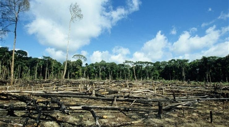 Peru End Deforestation Palm Oil