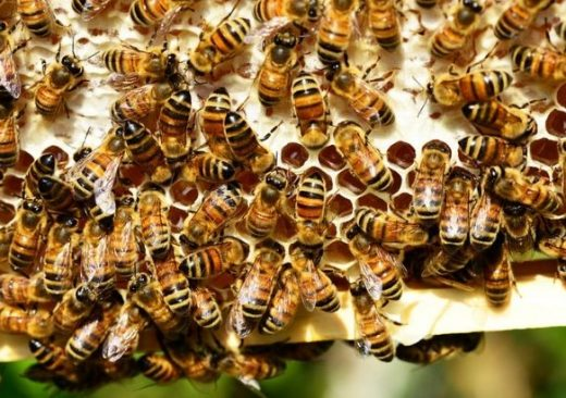 Toxic Pesticide Use Causing Insect Apocalypse