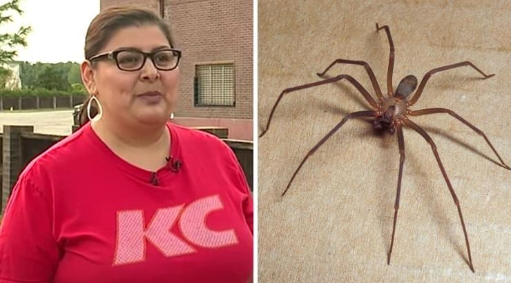 Woman Ear Deadly Spider