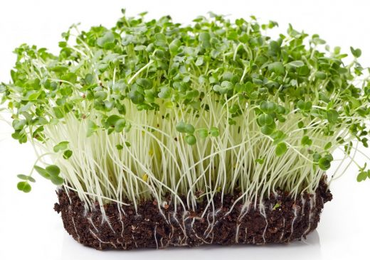 Broccoli sprouts benefits