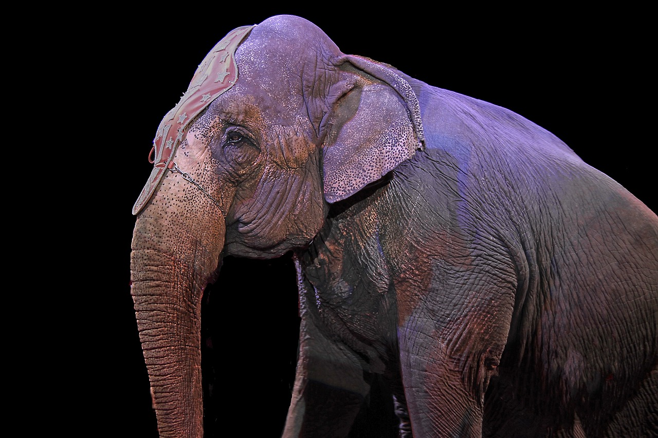 Animal Rights Win: California Bars Animals from Circuses, Becomes First State to Ban Fur Trade