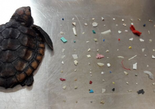 Baby Turtle 104 Pieces Plastic Belly
