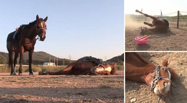 Horse Pretends to Be Dead