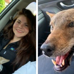 Woman Rescues Dog Coyote