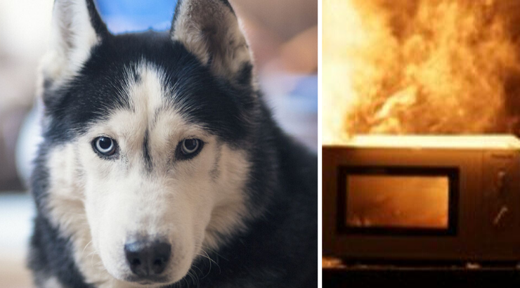 Dog Turns on Microwave, Starts House Fire