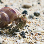Hermit Crabs Killed