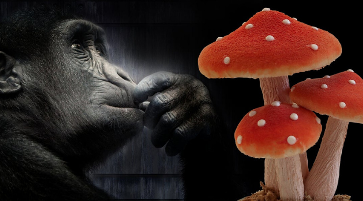 Stoned Ape Theory: Could Magic Mushrooms Be Responsible for Human Evolution?