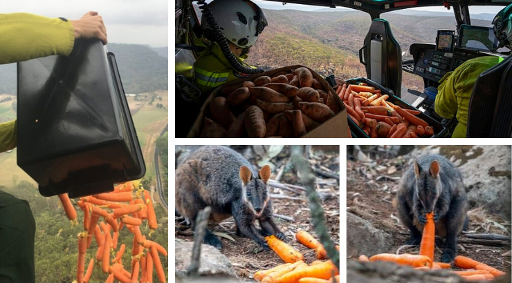 Australia is Dropping Vegetables From Choppers to Feed Wildlife Starved by Fires