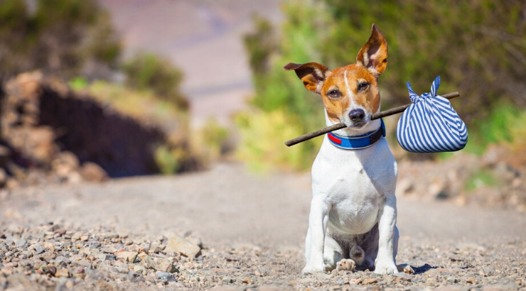 Veterans in California Can Now Adopt a Shelter Pet for Free