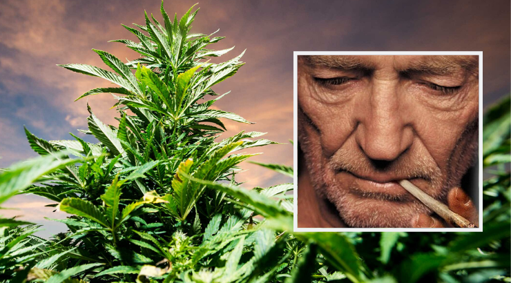 Willie Nelson Cannabis Industry