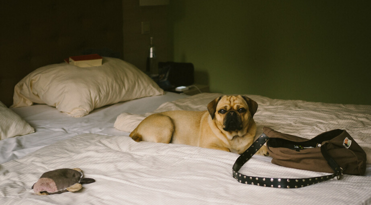 Hotel Foster Dogs