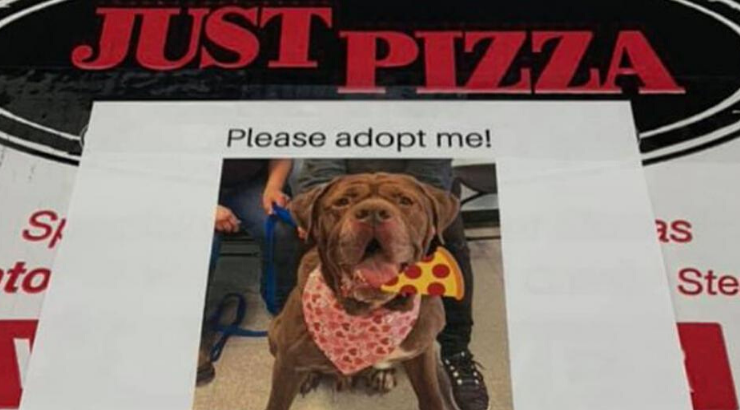 Shelter Dogs Pizza Boxes