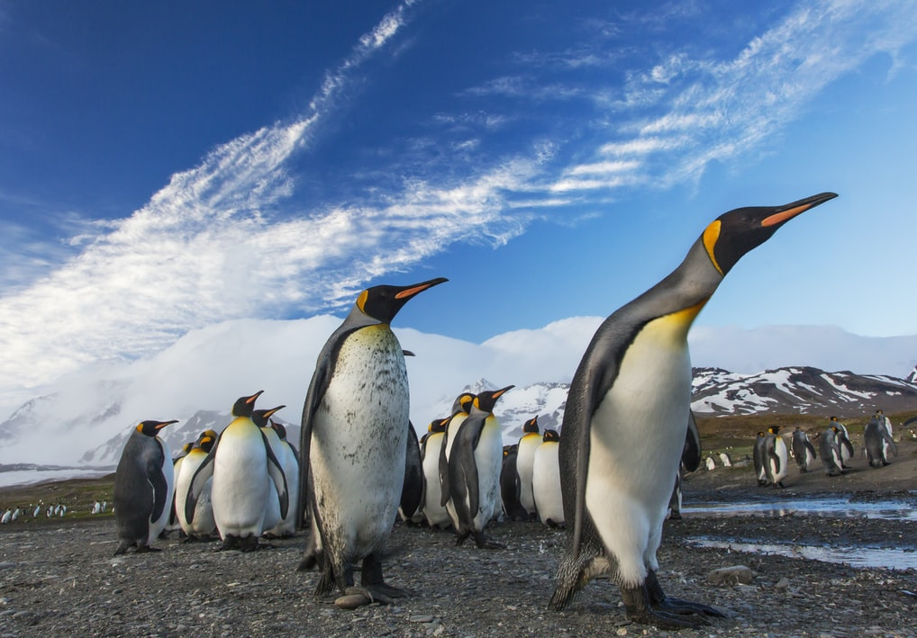 Scientists use satellites to discover hidden colonies of penguins across Antarctica